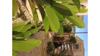 Detached villa, 3 bed, pool, FULL TITLE DEEDS